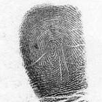 whorl fingerprint