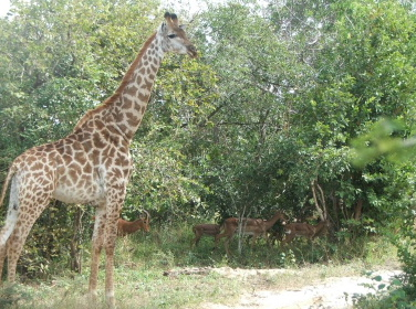 Visiting old friends in the bushveld