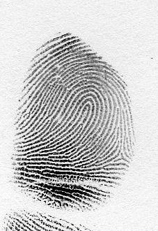 The loop fingerprint