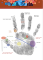 palmistry classes, palm reading classes, hand analysis classes, how to read a palm
