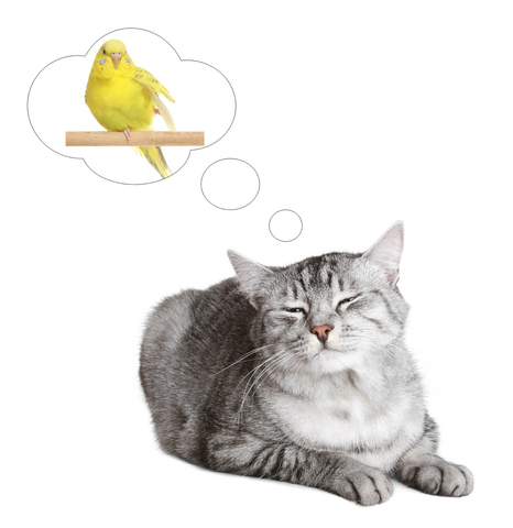 give the cat the canary