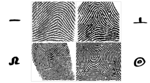 decoding life purpose from fingerprints, lifeprints, arch, tented arch, whorl, loop fingerprint