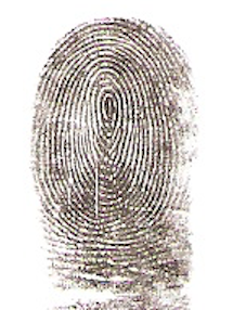whorl type fingerprint