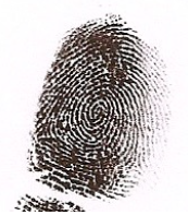 whorl fingerprint