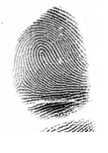 loop fingerprint